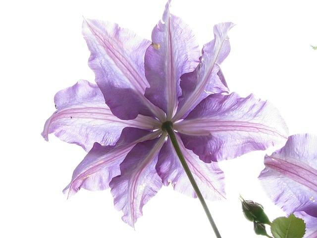 flower-123766_640